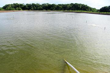 Fertilization fish ponds.
